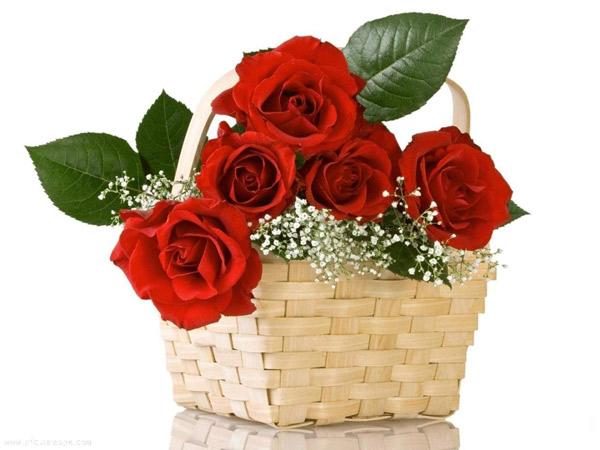 mua hoa tình yêu quận tân bình