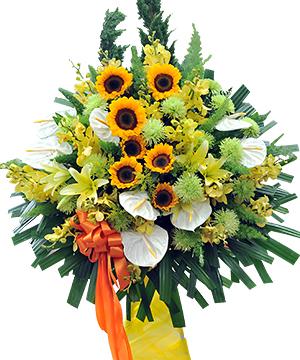 hoa tang khai truong dep