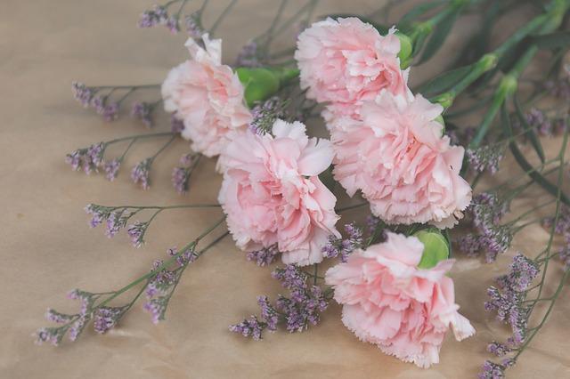 hoa cam chuong y nghia