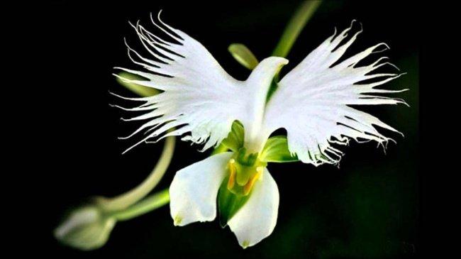 hoa co trang