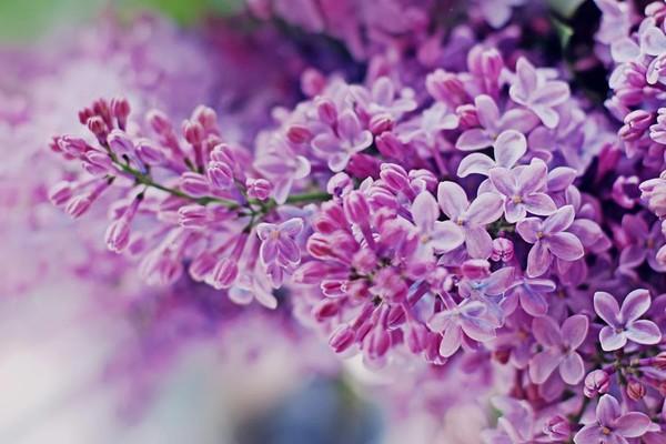 hoa tu dinh huong tim