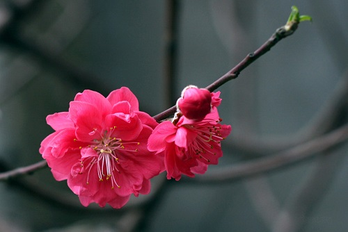 cau chuyen ve hoa dao
