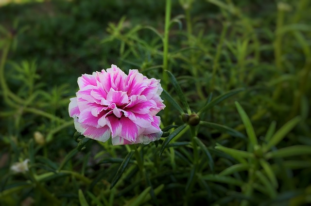 hoa muoi gio co y nghia gi